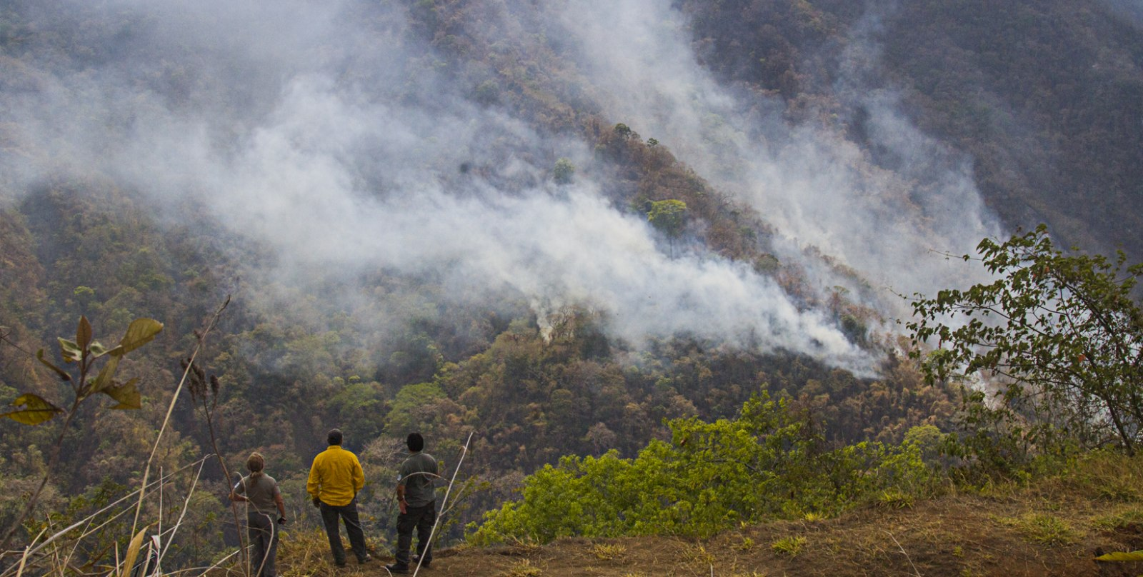Fires in Guanacaste Have Consumed More Than 1800 Hectares of
